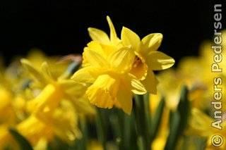 photo-watermark-example-yellow-flower